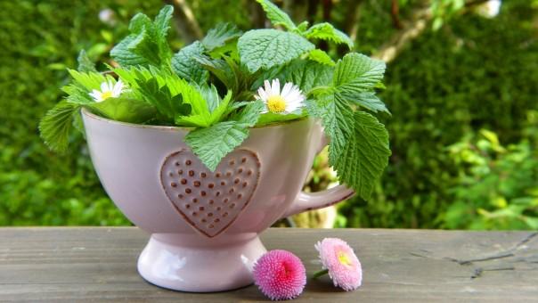 Phytothérapie : se soigner avec les plantes ?